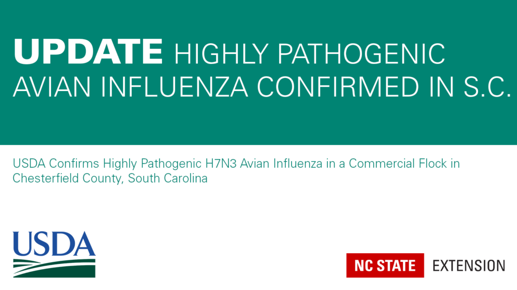 teal and white text announcement of avian influenza in Sourth Carolina