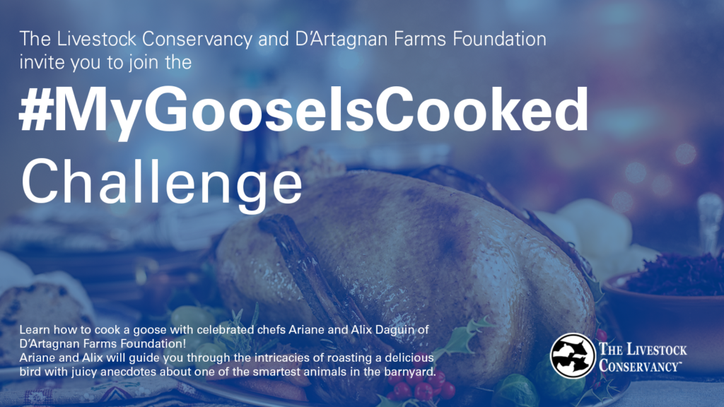 banner with a cooked goose and text The Livestock Conservancy and D'Artagnan Farms Foundation invite you to join the #MyGooseIsCooked challenge